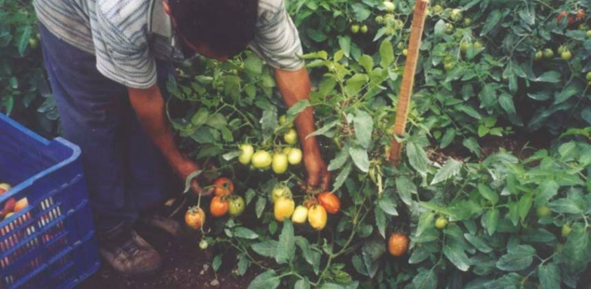 2004 / HONDURAS